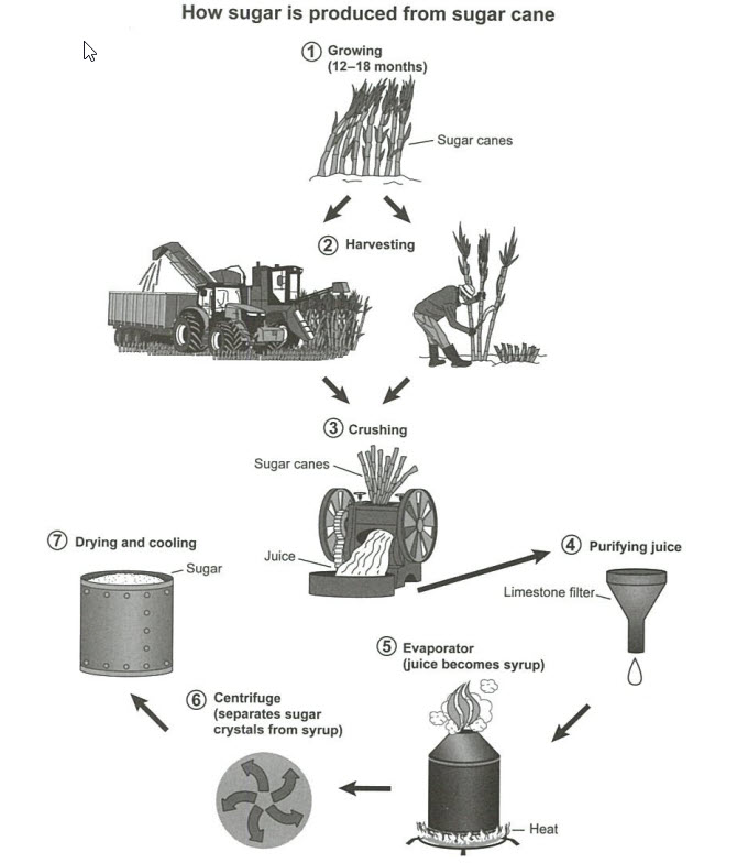 Manufacturing Process for Making Sugar From Sugar Cane