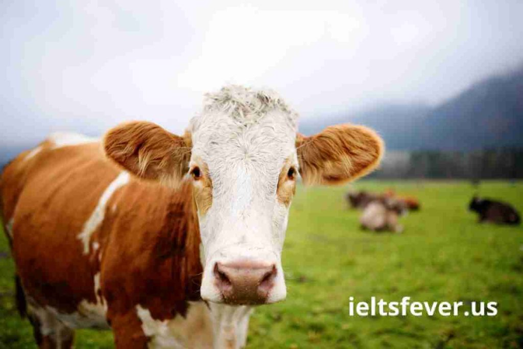 Farm Animals & Wild Animals IELTS Speaking Part 1 Questions With Answer (1)